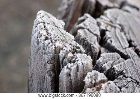 Selective Focus Of Morning Frost On The Wooden Stump In The Park. Frost Is A Thin Layer Of Ice On A