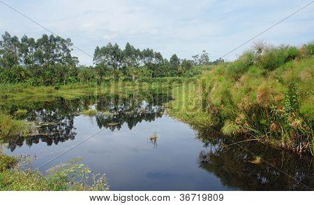 Waterside Scenery Near Rwenzori Mountains