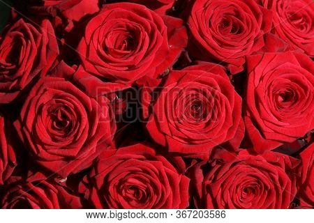 A Bouquet Of Wonderful Red Roses Closeup