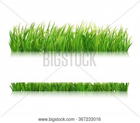 Mowed Green Grass Isolated On White Background. Realistic Horizontal Field, Lawn Or Meadow. Vector I