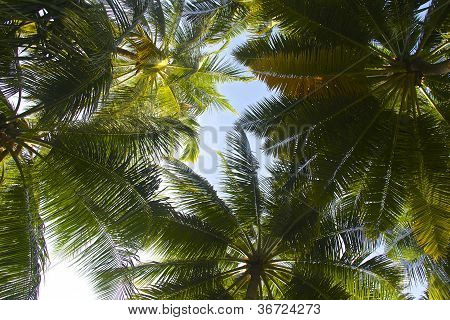 Palm tree roof