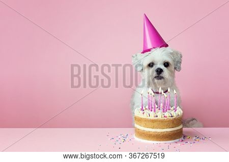 Cute white dog with birthday cake and pink candles against a pink background