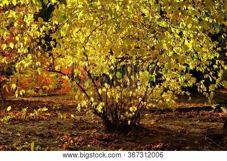 Autumn Leaves On The Sun. Yellow, Orange, Brown Leaves On Ground In Autumn Season. Park In City, Fab