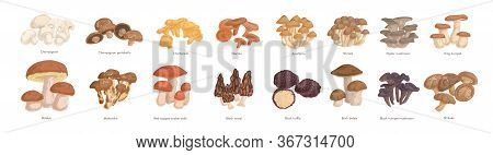 Set Of Realistic Colorful Edible Mushrooms Vector Graphic Illustration. Collection Of Various Type O
