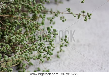 Wild Marjoram, Origanum Vulgare O Sweet Marjoram. Selective Focus, Space For Text. Aromatic, Perenni