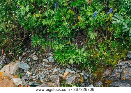 Scenic Background With Stony Footpath Among Lush Vegetation. Rocky Trail On Mountainside With Fresh