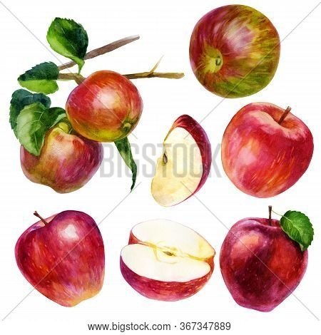 Watercolor Illustration, Set. Watercolor Red Apple, An Apple With A Leaf, A Red-green Apple, A Pink