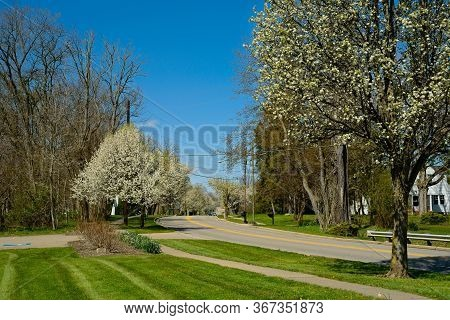 Trees Blossom Along A Residential Street At The Beginning Of Spring In Northeast Ohio