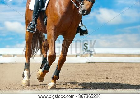 Horse Dressage Closeup In Manege. Saddle Horse On Show Competition. Equestrian Sportive Competitions