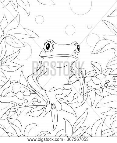 Funny Poisonous Frog Sitting On A Tree Branch In A Wild Tropical Jungle, Black And White Outline Vec