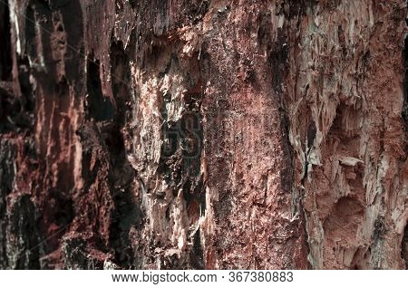 Old Rotten Wood Alder. Old Weathered Mouldering Tree. Weathered Tree Destruction. Background Or Text