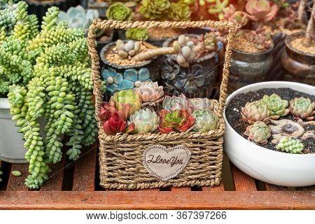 cactus succulents in a planter basket