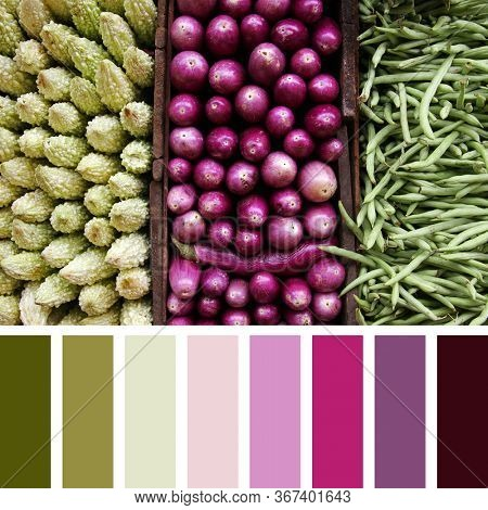 A triptych of vegetables, bitter gourds, aubergines and green beans, in a colour palette with complimentary colour swatches.
