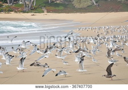 Flock Of Seagulls On The Sand Of A Deserted Sea Beach. Sea Landscape With Seagulls