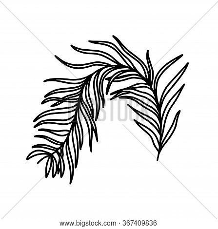 A Branch Isolated On A White Background. The Branch Of The Olive Tree. Vegetation. Plant Elements. V