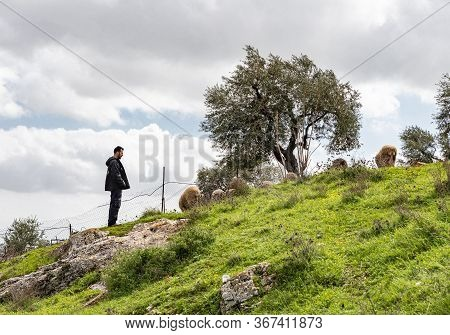 Jerusalem, Israel, February 29, 2020 : Shepherd Grazing Sheep On The Gey Ben Hinnom Park Slope - Cal