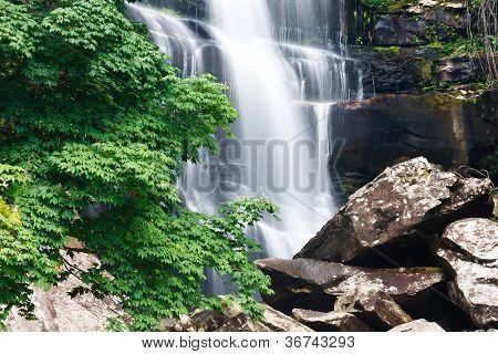 Beautiful Waterfall And Green Maple Tree