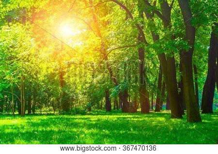 Summer sunny park landscape. Summer city park with deciduous green trees in sunny weather. Summer landscape, summer trees in the park. Sunny summer background