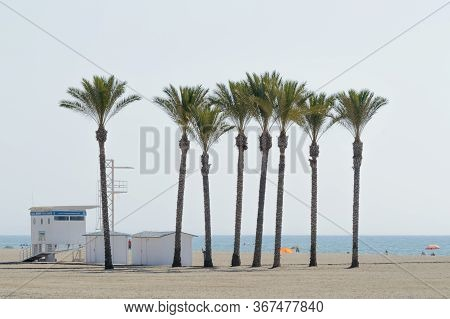 Oasis Of A Large Group Of Palm Trees On The Beach Of Roquetas De Mar. August 14, 2019. Roquetas De M