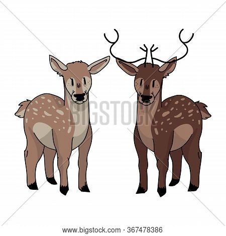 Cute Forest Doe And Buck Love Vector Illustration. Buck Deer With Antlers. Childlish Hand Drawn Dood