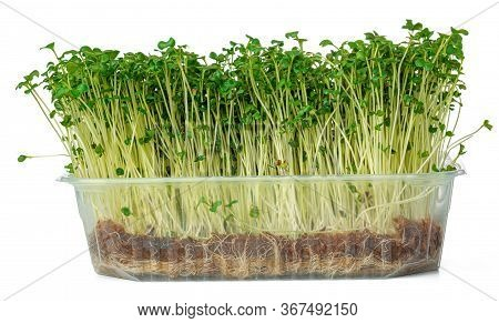 Micro Green Sprouts Of Watercress Salad Isolated On White