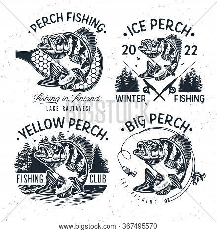 Eurasian River Perch Fish.yellow Perch Fishing Club Emblem. Bass Fishing Logo Isolated On White Back