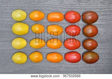 Conceptual Gradient Various Colorful Cherry Tomatoes, Close Up
