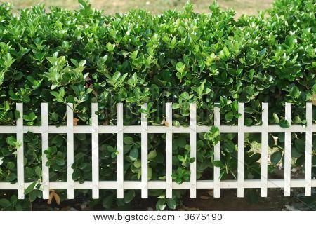 Graden Fence
