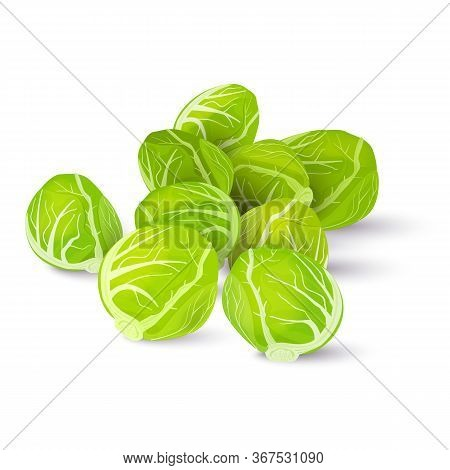 Several Heads Of Fresh Brussels Sprouts Isolated On A White Background. Vector Illustration.