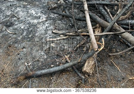 Pile Of Burnt Branches After A Forest Fire, Consequence Of The Forest Fire.the Result Of Human Carel