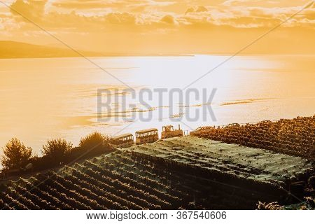 Lavaux, Switzerland: Touristic Train Over The Lake Geneva During Sunset Seen From Lavaux Vineyard Ta