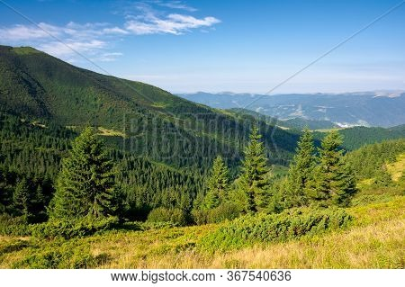 Forest On The Hillside. View In To The Valley. Green Nature Scenery Concept. Beautiful Mountain Land