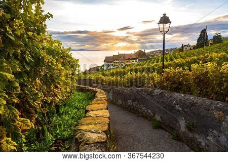 Lavaux, Switzerland: Lake Geneva And Traditional Swiss Hauses During Sunset Seen From Lavaux Vineyar