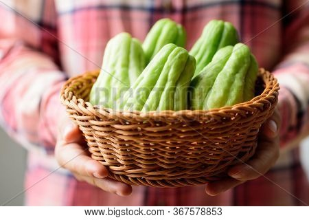 Chayote Squash Or Mirlition Squash In Basket Holding By Hand, Organic Vegetable