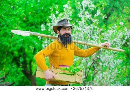 Eco Farm. Man Farmer. Gardening. Farmer Works In Garden. Farmer Hold Box. Spring Farming. Bearded Ma