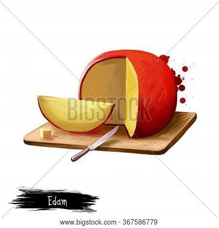 Edam Cheese On Wooden Board Digital Art Illustration Isolated On White Background. Fresh Dairy Produ