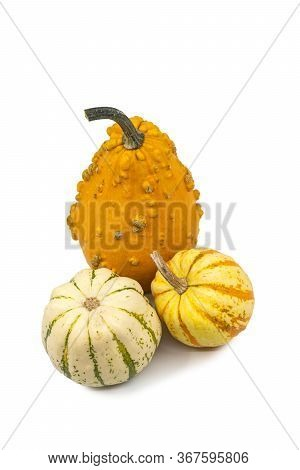 Three Fresh Ornamental Autumn Cucurbita Gourds Or Pumpkin With Assorted Shapes And Colors Viewed Hig