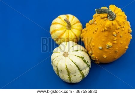 Colorful Autumn Ornamental Gourds Or Pumpkins On Blue With Copy Space For Your Thanksgiving Greeting