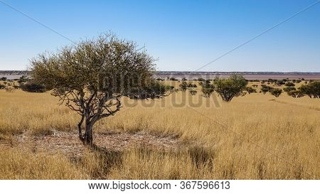 Scenic Wide Angled Landscape Of Savanna With Tree In Foreground, Namibia