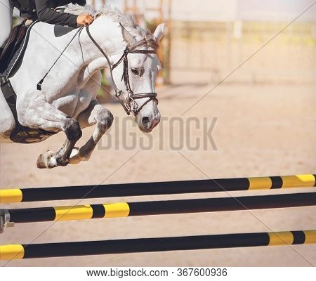 A Fast White Racehorse With A Rider In The Saddle Jumps Over The Yellow-and-black Striped Barrier At