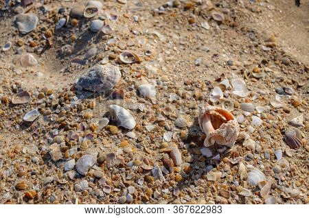 Gold Sand With Seashells On The Foreground. Design For Interiors. Tropical Sand Background Close-up.