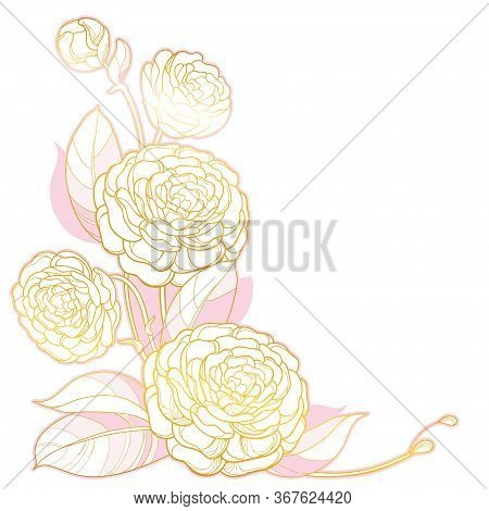 Vector Corner Bouquet With Outline Camellia Flower Bunch, Bud And Leaf In Pastel Pink And Gold Isola