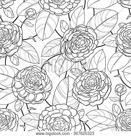 Vector Seamless Pattern With Outline Open Camellia Flower, Bud And Ornate Leaf In Black On The White