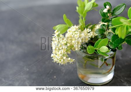 White Summer Flowers In A Glass Vase. Wild Ash Or Rowanberry Flowers And Cowberry Branches. Poster O