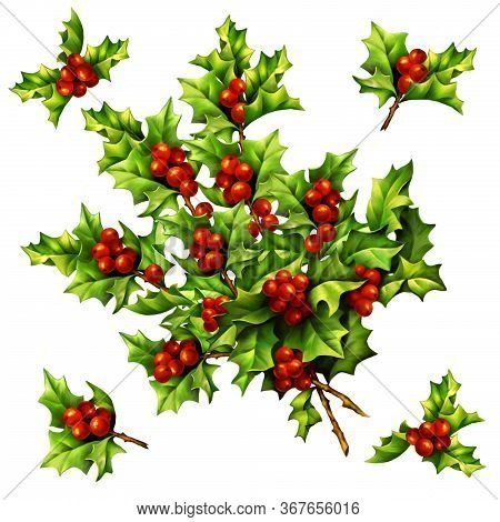 Christmas Vintage Holly Berries, Digital Hand Drawn Illustration For Design