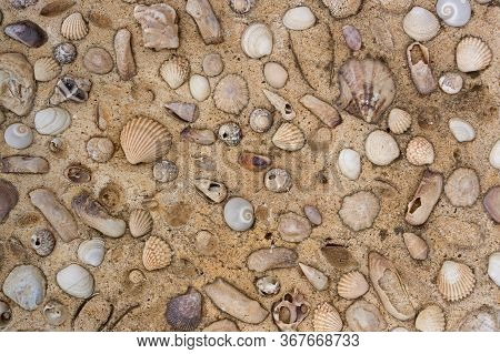 A Concrete Wall With Shells Texture, Background. Plaster Wall. The Shells In Cement.