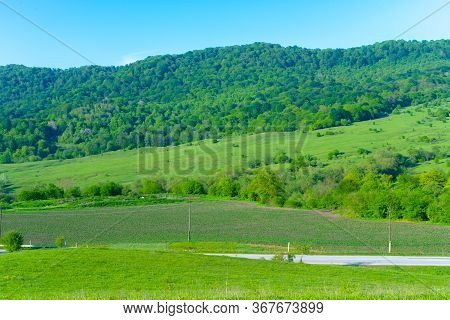 Plains Covered With Vegetation And Trees.plains Covered With Vegetation And Trees