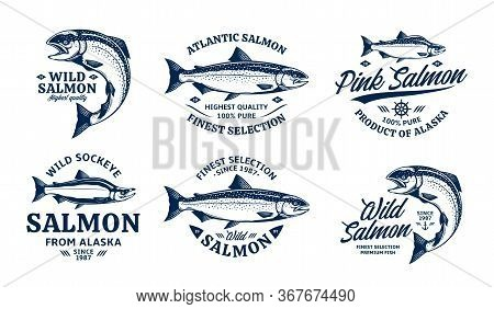 Vector Salmon Logo And Fish Illustrations