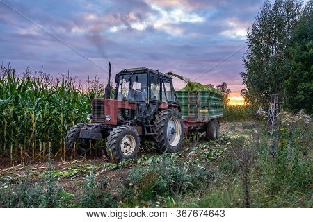 Tractor Harvesting Organic Corn Field For Biomass On Cloudy Summer Evening With Sunset Colors And Dr