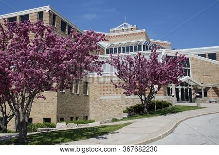 Mississauga, Ontario / Canada - May 20, 2016: Crab Apple Trees In Full Bloom At Dufferin-peel Cathol
